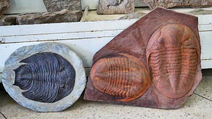 Trilobiten in Merzouga