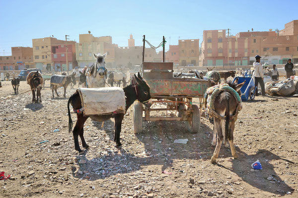Esel-Parkplatz am Markt von Rissani