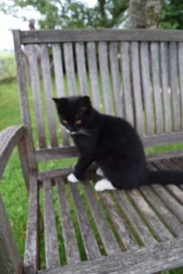 Tom, eine unserer Katzen
