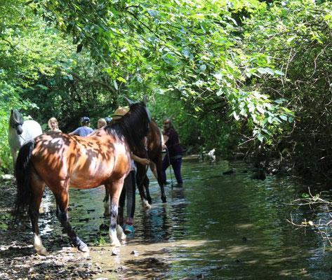Pferde und Ponys sind eure Partner bei den Reiterferien für Kölner Kinder