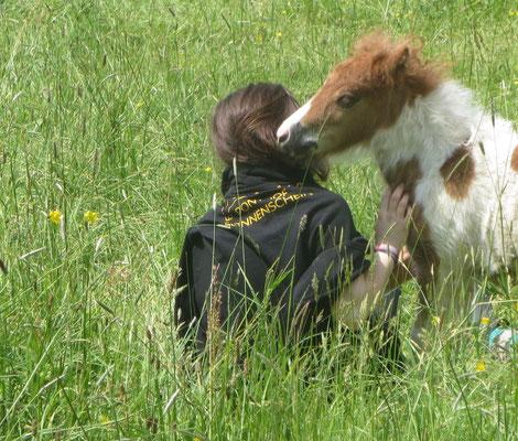 Ponyhof Sonnenschein Fohlen
