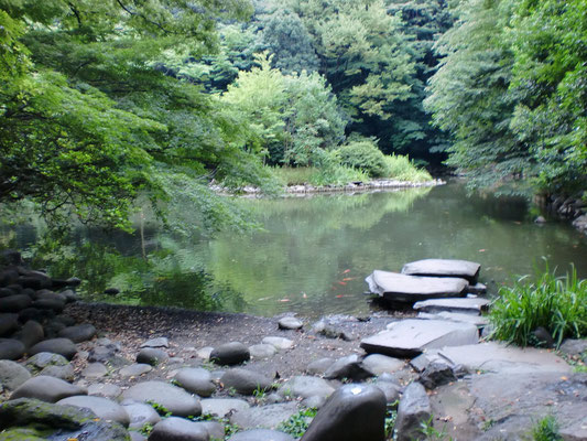 夏の三四郎池