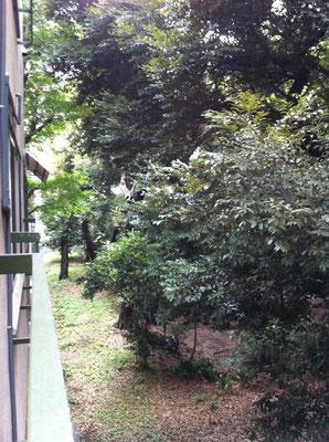 自習室から見える東大庭園②