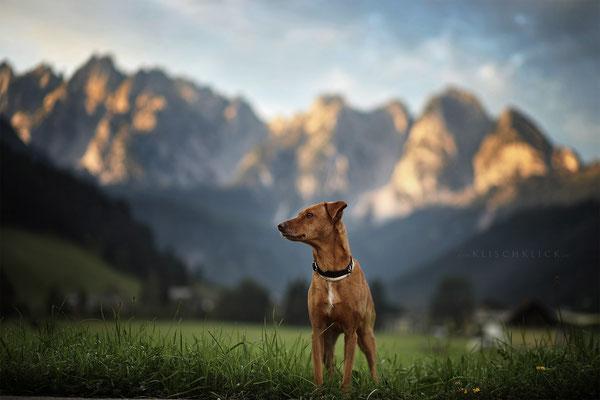 Hund im Gosautal