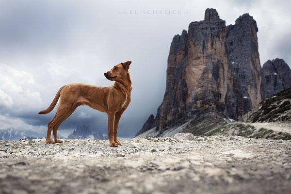 Hund bei den drei Zinnen