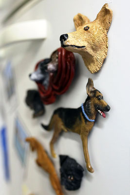 indivuduelller Tiermagnet, Hundemagneten