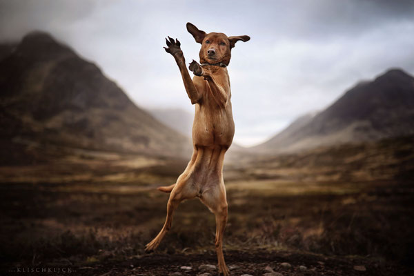 Roadtrip mit Hund Schottland Glen Coe