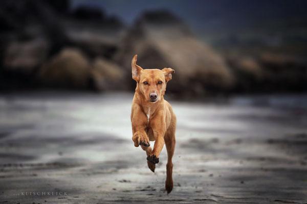 Roadtrip mit Hund Schottland Strand Staffin