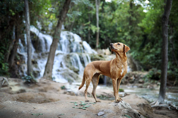 mit Hund im Nationalpark Krka, Kroatien