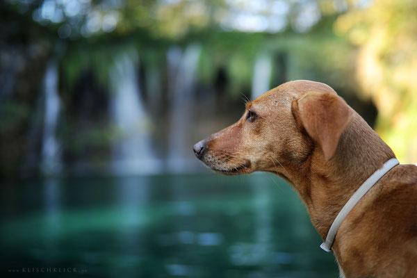 mit Hund im Nationalpark Plitvicer Seen