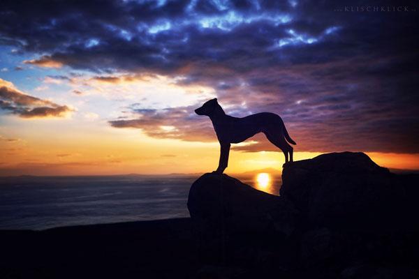 Roadtrip mit Hund Schottland  Neist Point