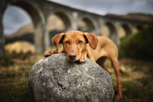 Roadtrip mit Hund Schottland glenn finnian viadukt