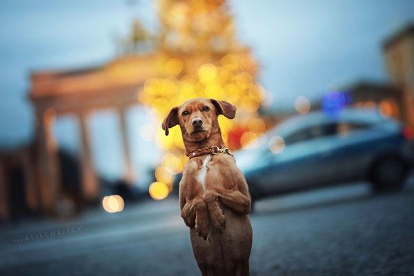 Hundefotograf Berlin