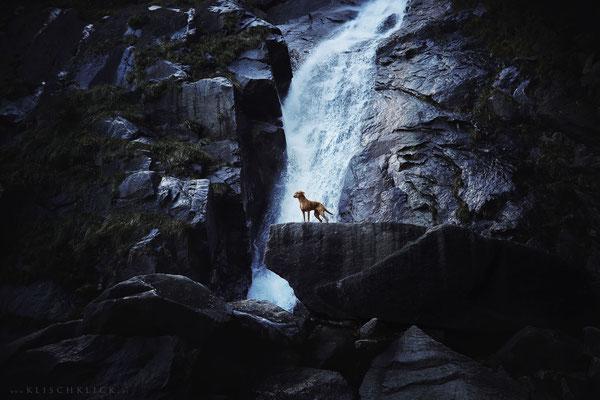 Hund Pina Barbianer Wasserfall