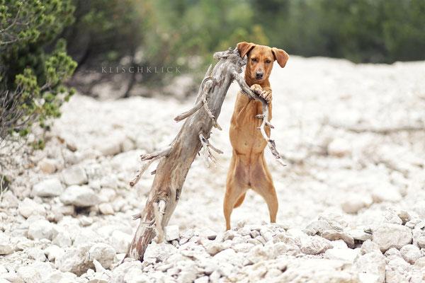 Hund am Pragser Wildsee