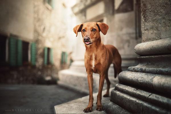 mit Hund in Sibenik, Kroatien