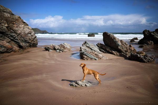 Roadtrip mit Hund Schottland Strand