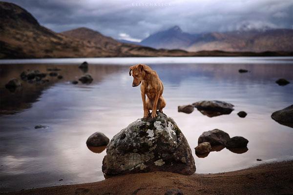 Roadtrip mit Hund Schottland
