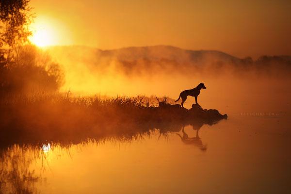 Hund Morgennebel