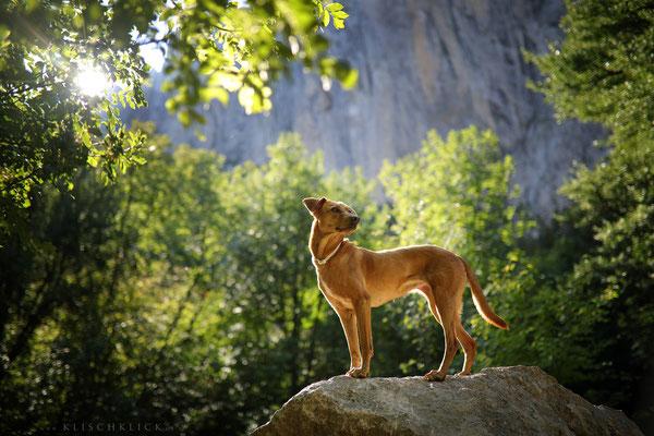 mit Hund im Nationalpark Paklenica
