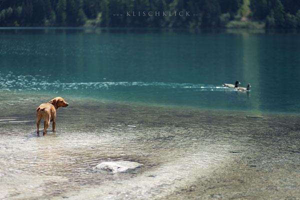 Hund am Antholzer See