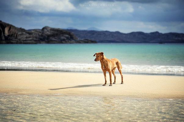 Roadtrip mit Hund Schottland Oldshoremore