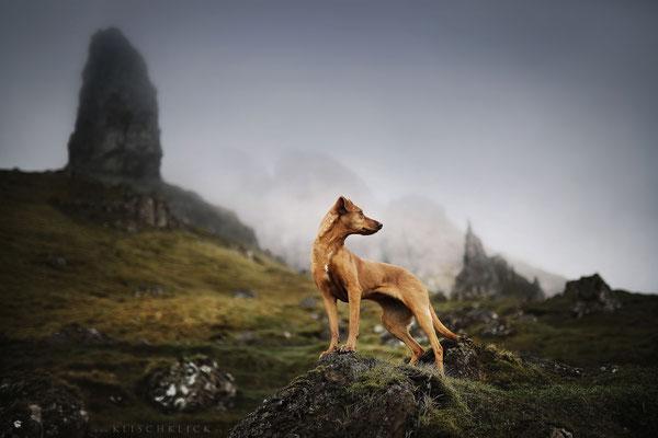 Roadtrip mit Hund Schottland old man of storr