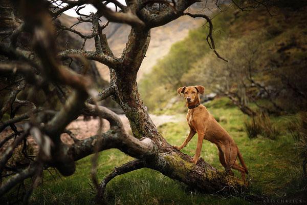 Roadtrip mit Hund Schottland Steall Falls