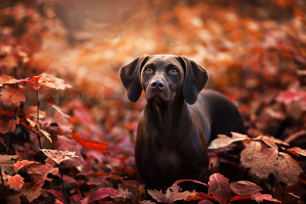 Severin Klisch Tierfotografie Hunde