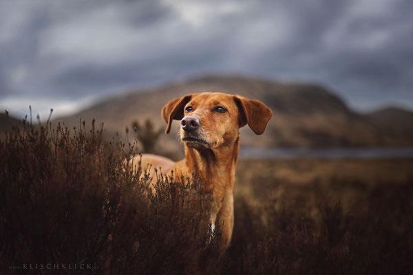 Roadtrip mit Hund Schottland heide