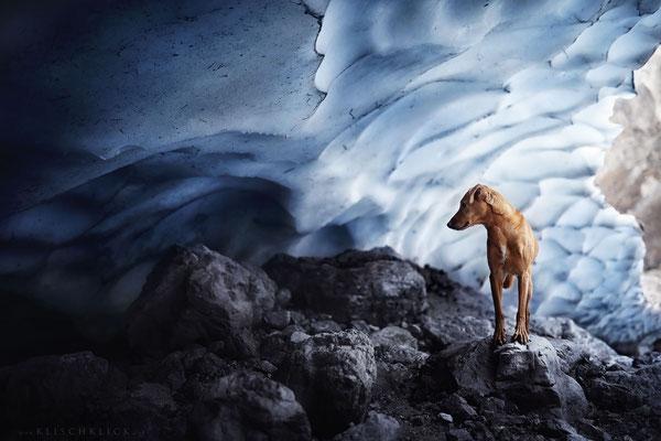 Hund Pina in der Eiskapelle,  Berchdesgaden
