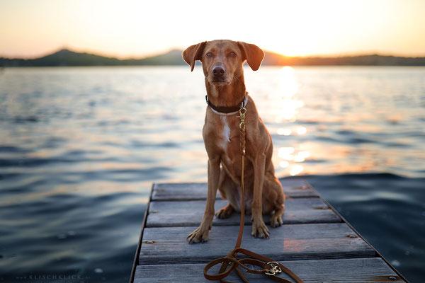 mit Hund in Kroatien am Meer