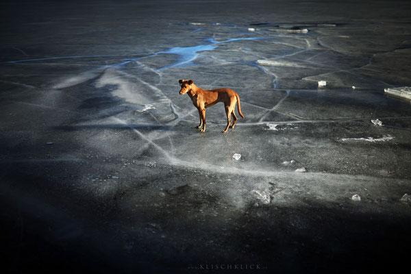 Pina on ice