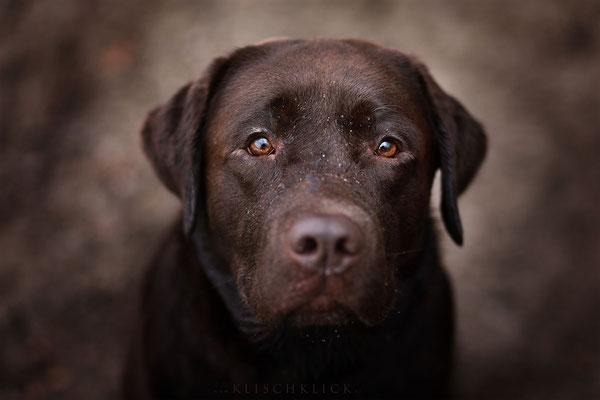 Labrador Hundefotograf Berlin
