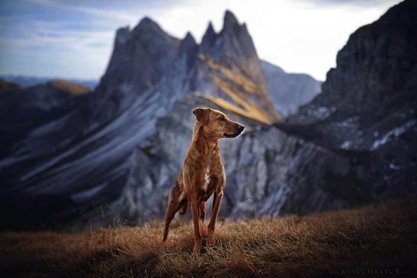 Hund Pina auf der Seceda