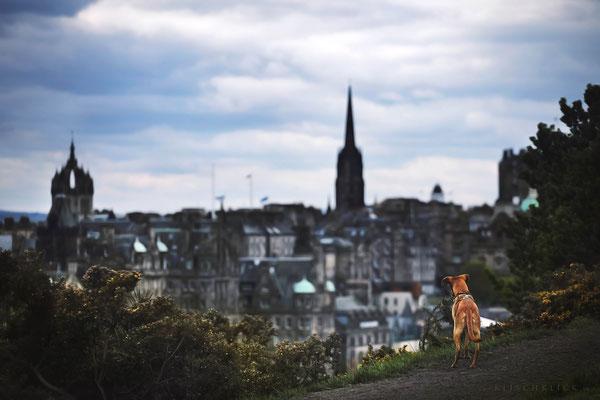 Roadtrip mit Hund Schottland Edinbourgh