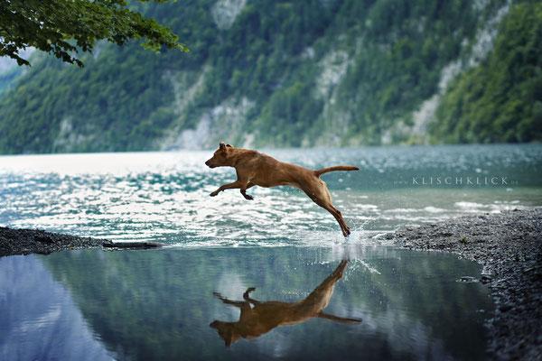 Hund am Königssee