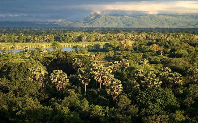 Malawi Mvuu