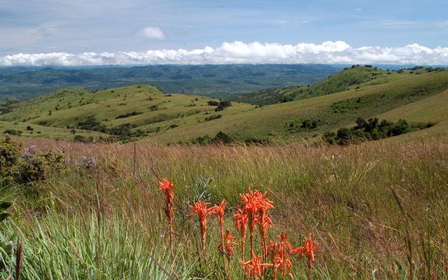 Malawi Nyika Plateau
