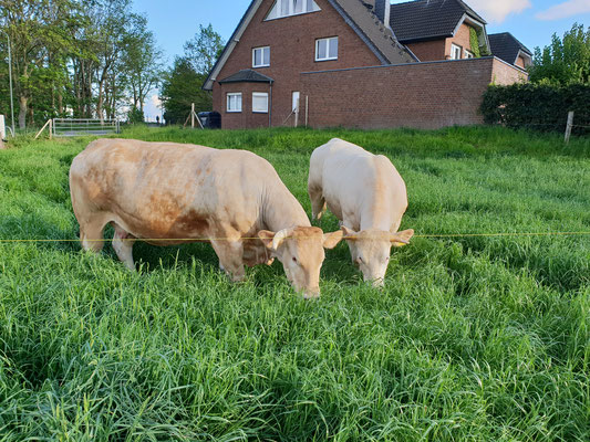 Nscho-Tschi und Indiana auf der Wiese am Fritz-Köhler-Weg