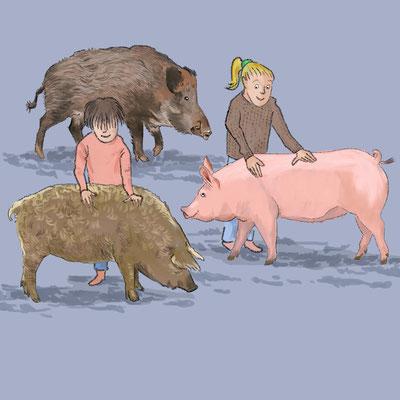 """Postenbild """"Schweine-Vielfalt"""". Kunde: PH Bern und Freilichtmuseum Ballenberg"""