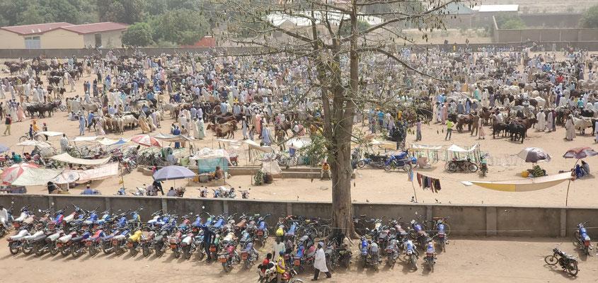 Maroua, marché du bétail
