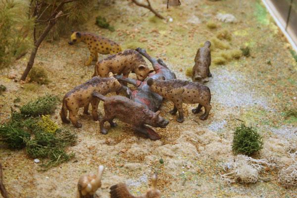 Hyänen beim Fressen