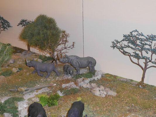 Spitzmaul-Nashörner