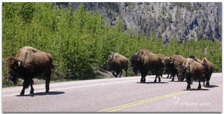Het ultieme Yellowstone gevoel!
