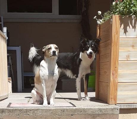 CHILLI & BENJI