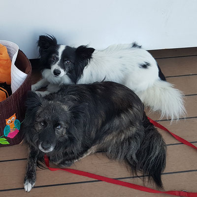 Wilma (Lathka) und Rübe (Cywil)