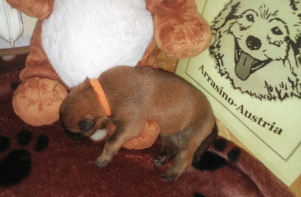 ...  auf dem Stofftier eingeschlafen