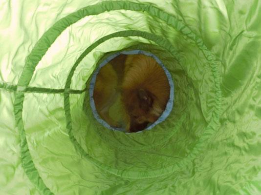 Bia durch den Tunnel betrachtet