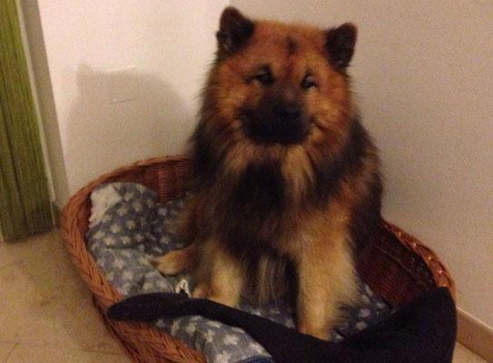 Alvo mag sein Bettchen - wie seine Mama Ylvi :-)